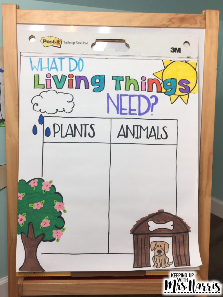 Life Cycle Anchor Chart - Anchor charts - science anchor chart