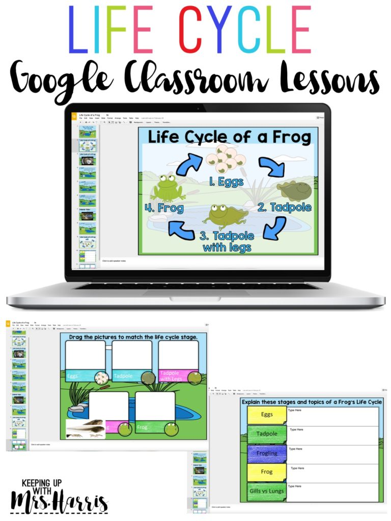 Keepingupwithmrsharris@gmail.com Classroom Lessons - Life Cycles - Life Cycle of a Frog - Frog Life Cycle